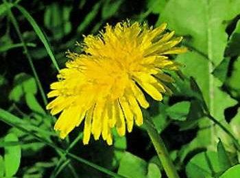 Cellulite: ridurla con le erbe