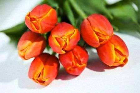 Come Curare Le Piante I Tulipani Pourfemme