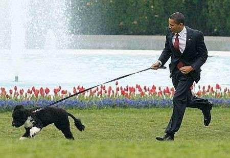 Barack Obama porta a spasso il cane tutte le sere