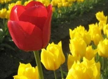 Come curare le piante: i bulbi primaverili