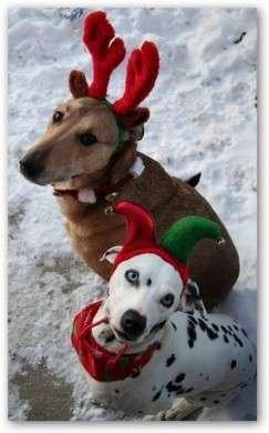Immagini Animali Natale.Regali Di Natale 2009 Per Animali Pourfemme