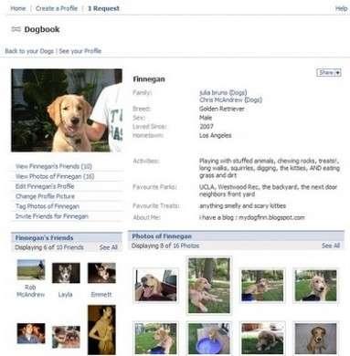 Dogbook, arriva Facebook per Cani