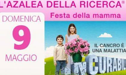 Idee regalo Festa della mamma: Azalea di beneficenza AIRC