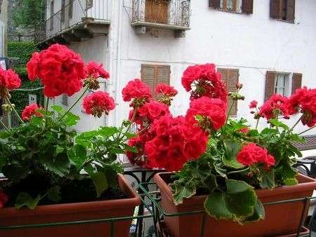 Come curare le piante: preparare le fioriere per il balcone