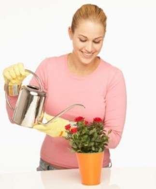 Come curare le piante: le rose nei vasi
