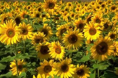 significato dei colori giallo
