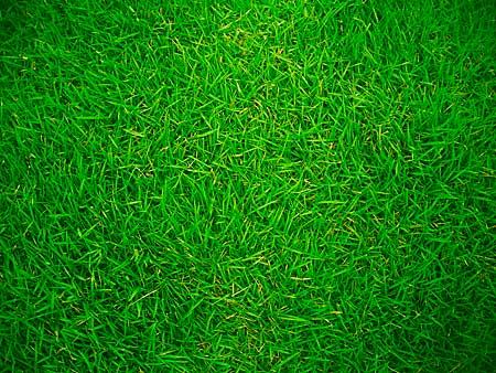 significato dei colori verde