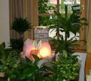Feng Shui: come disporre le piante in casa