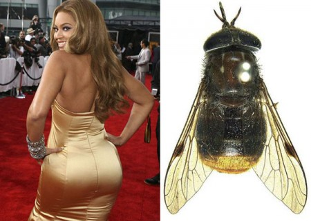 Povera Beyoncé, il suo nome e il suo lato B usati per identificare un tafano…