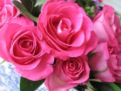 Fiori Festa della Mamma rosa