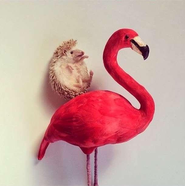 Darcy, il riccio più famoso di Instagram [FOTO]