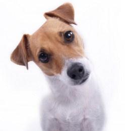addestramento cani Palermo