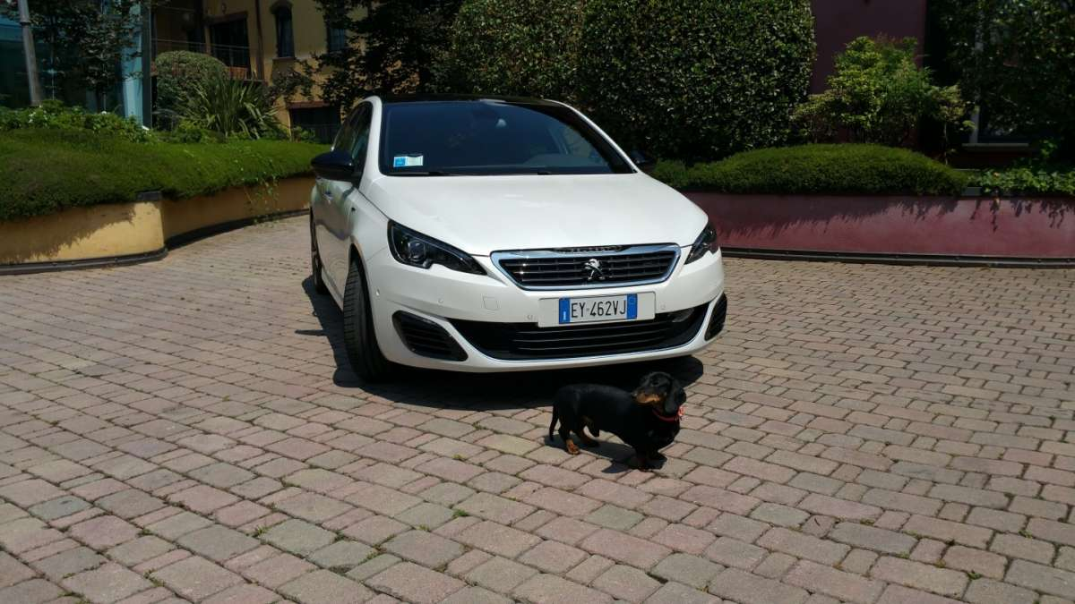 Vacanza a Roma con il bassotto a bordo della Peugeot 308 GT [FOTO]