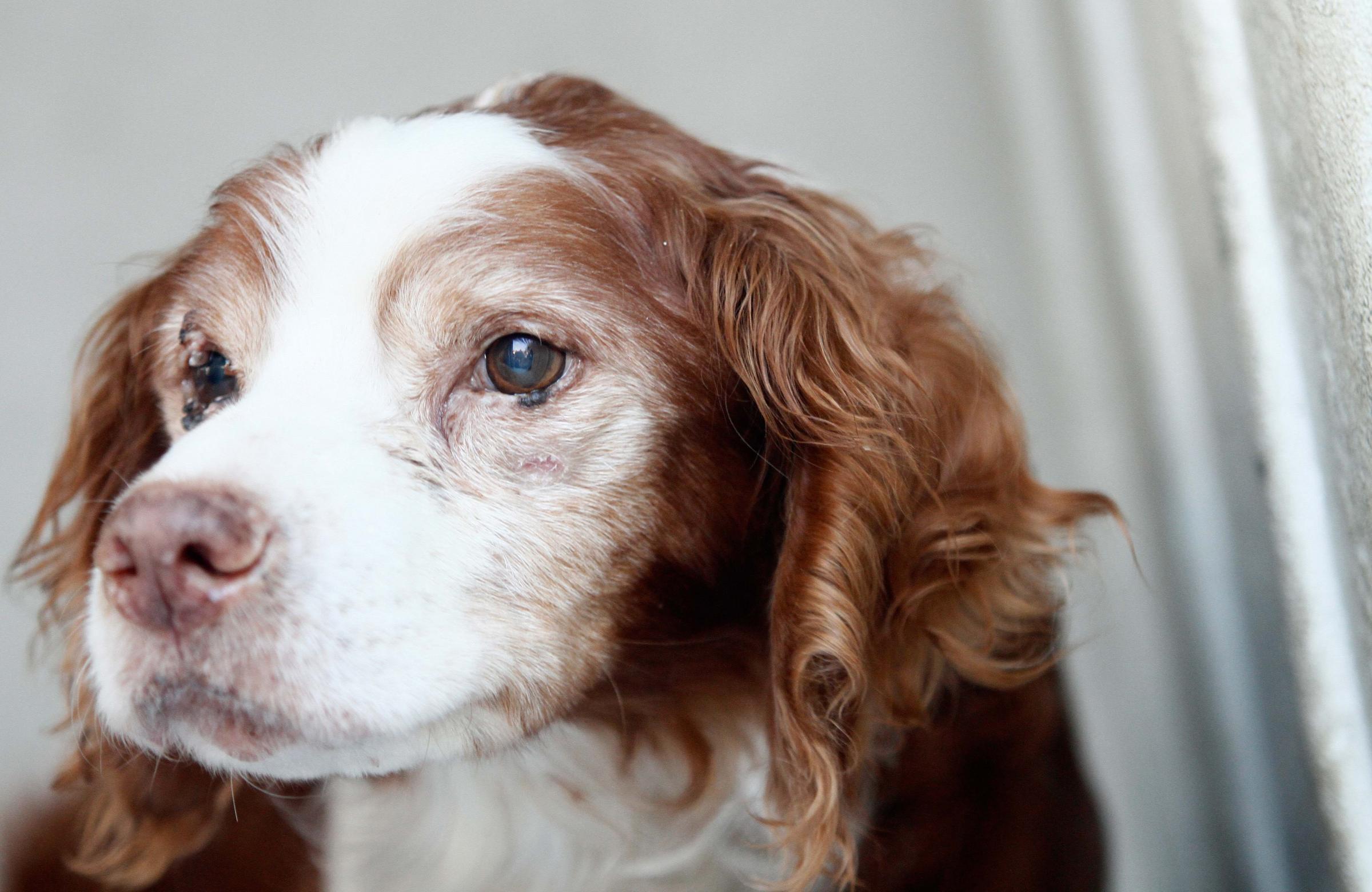 Jerry, il cane sepolto vivo dal padrone ritorna al canile in attesa di adozione