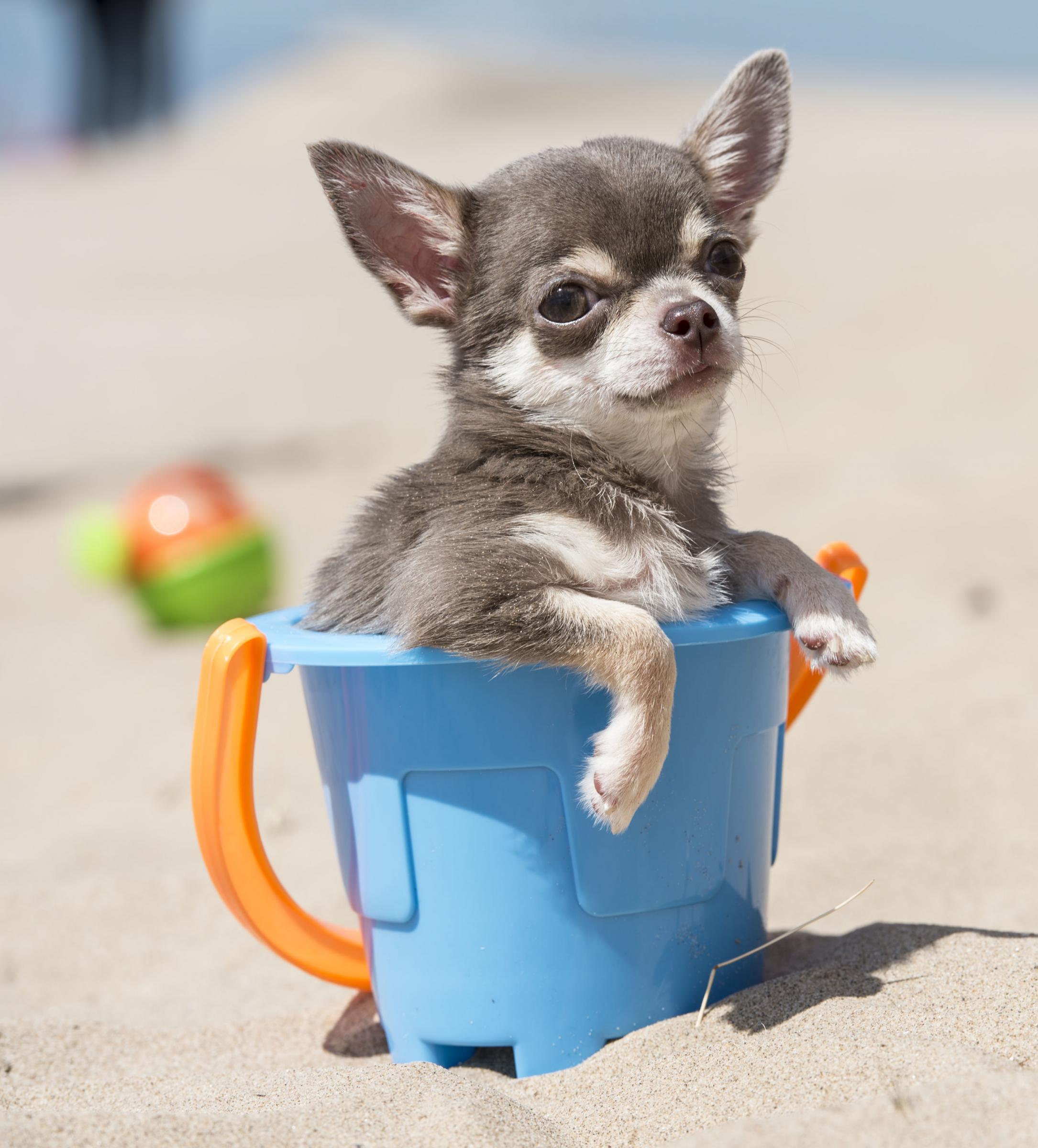 Il cane piu' piccolo del mondo