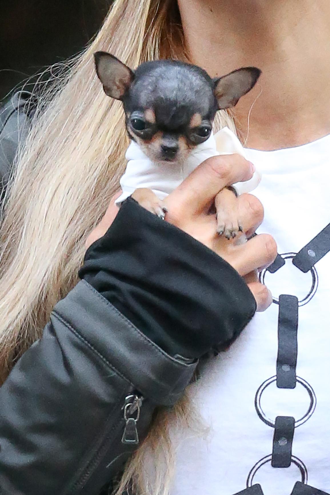 Paris Hilton a passeggio con il suo cagnolino