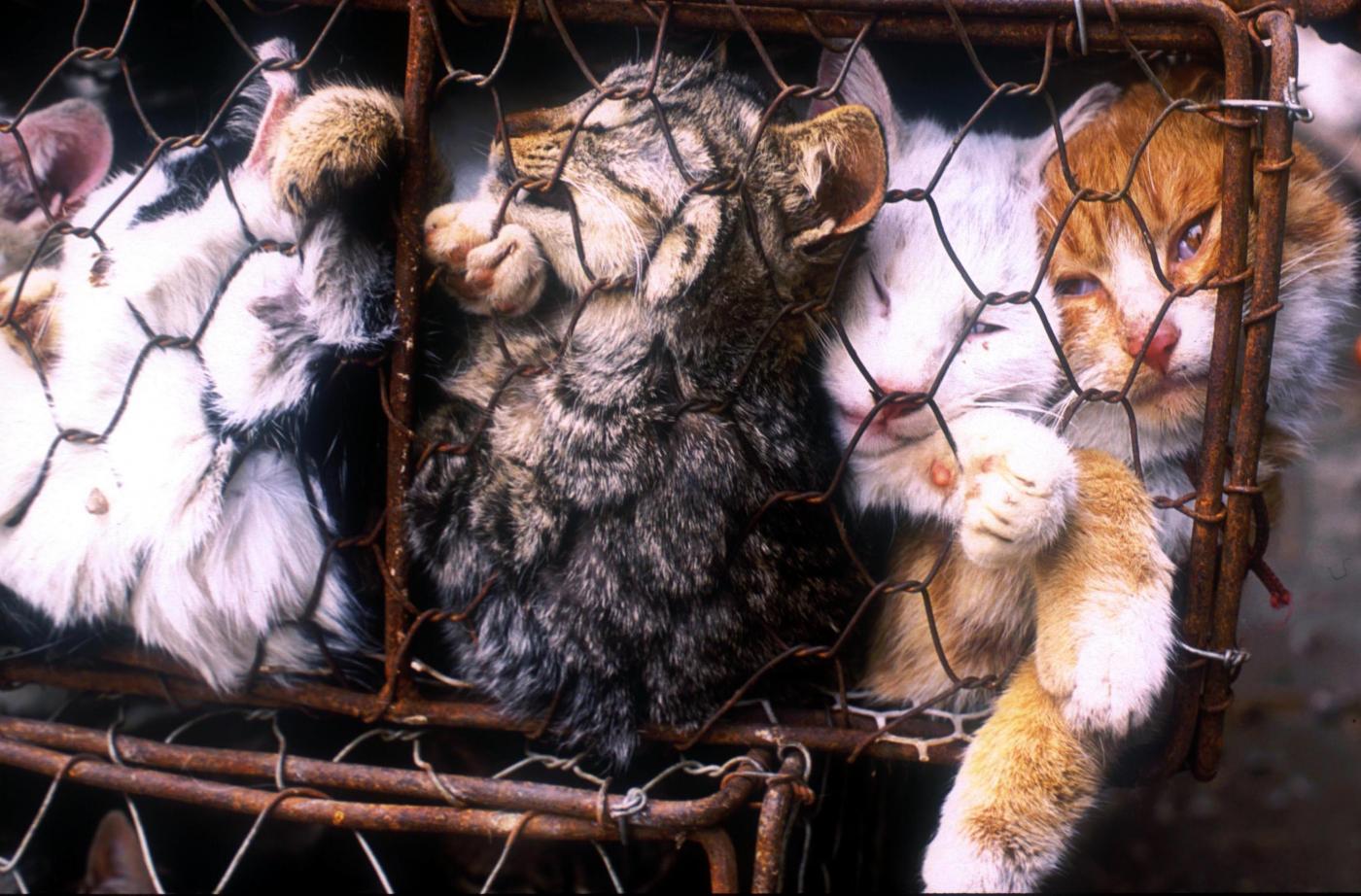 Taiwan, il consumo di carne di cane e di gatto è stato vietato: è il primo Paese asiatico