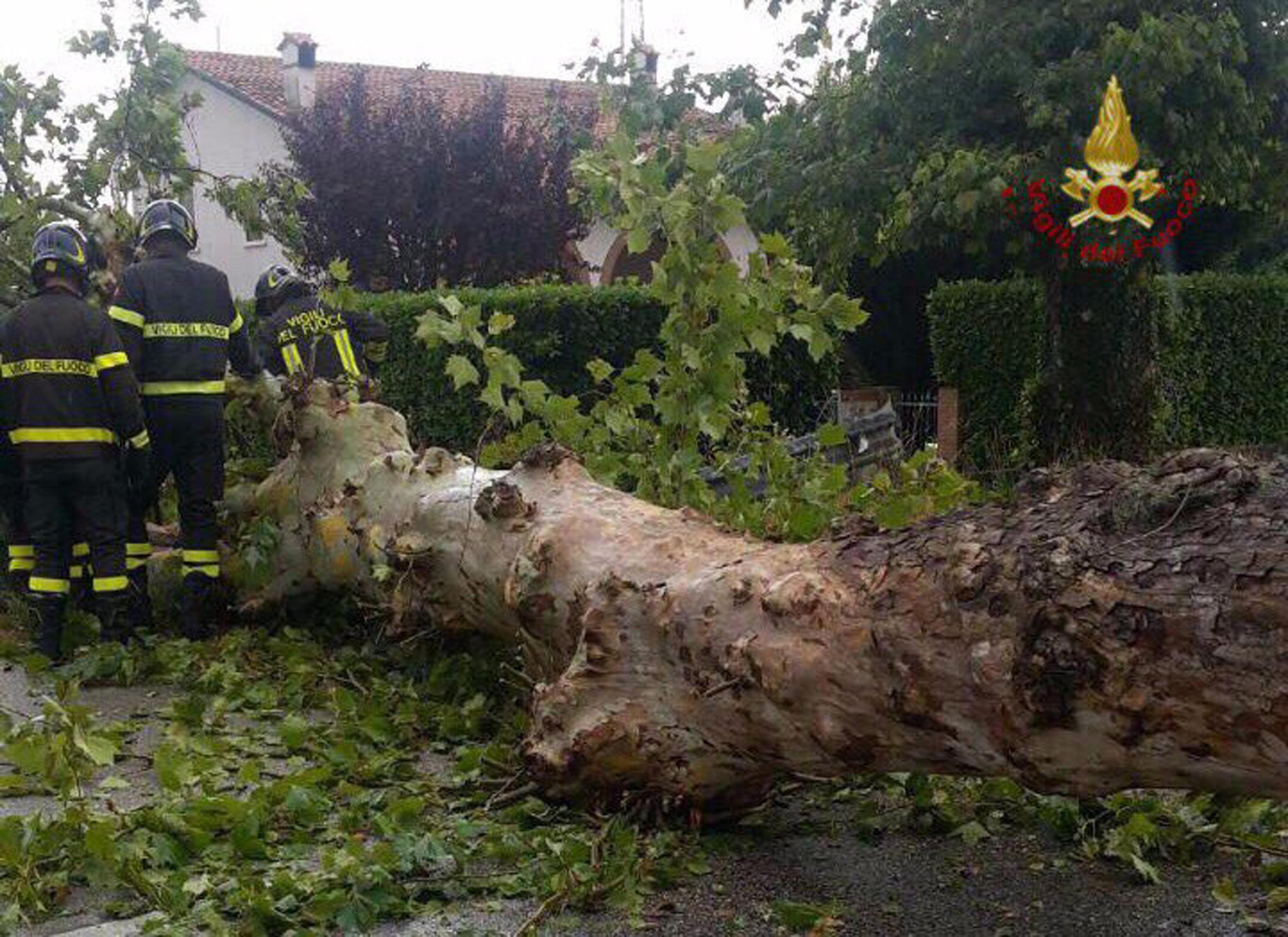 Maltempo: Fvg; albero cade su auto, ferita conducente