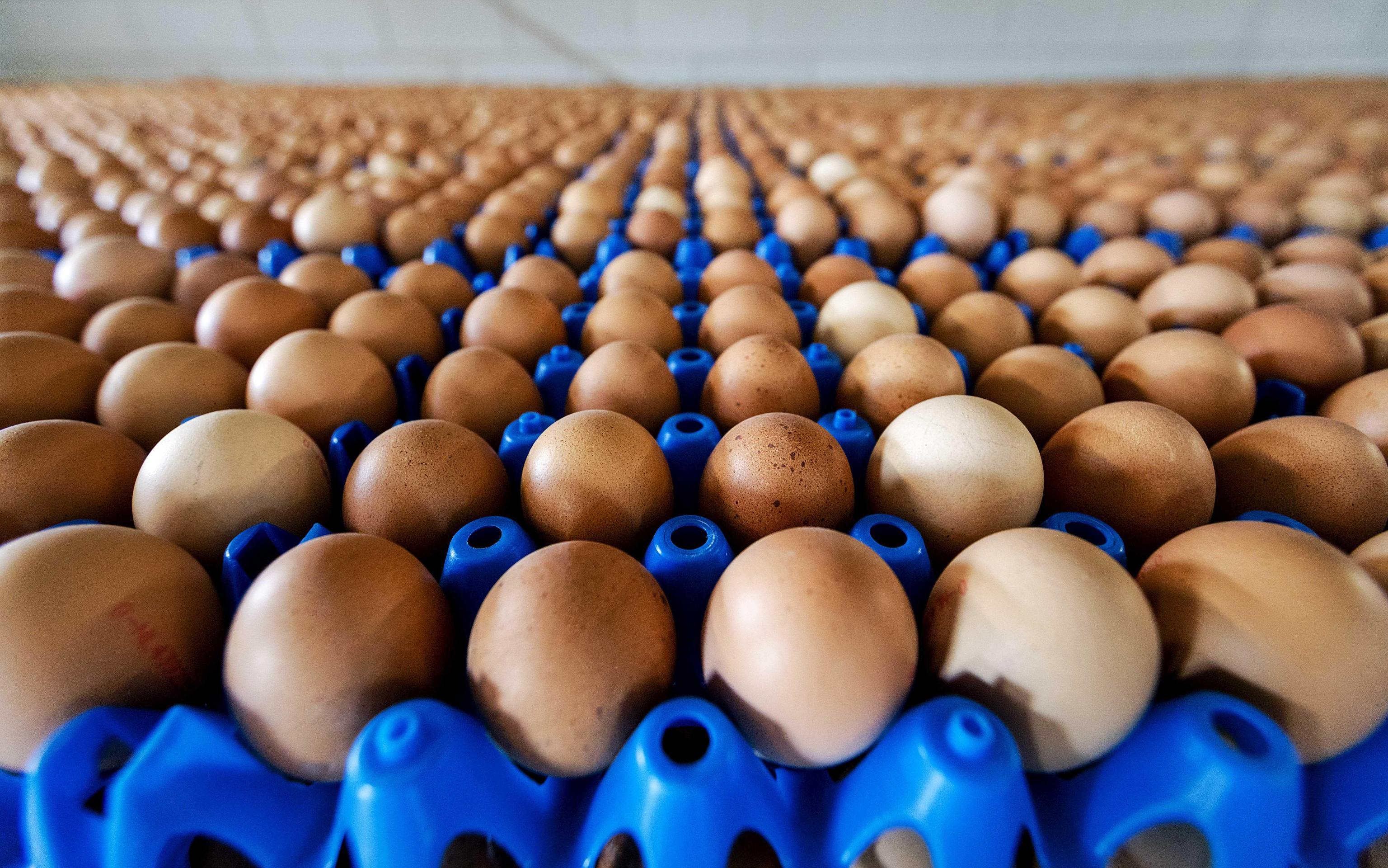 Germania, ritirate dal mercato milioni di uova olandesi contaminate dal Fipronil