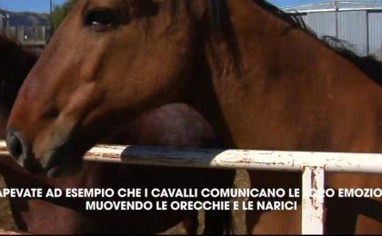 Fatti incredibili sui cavalli