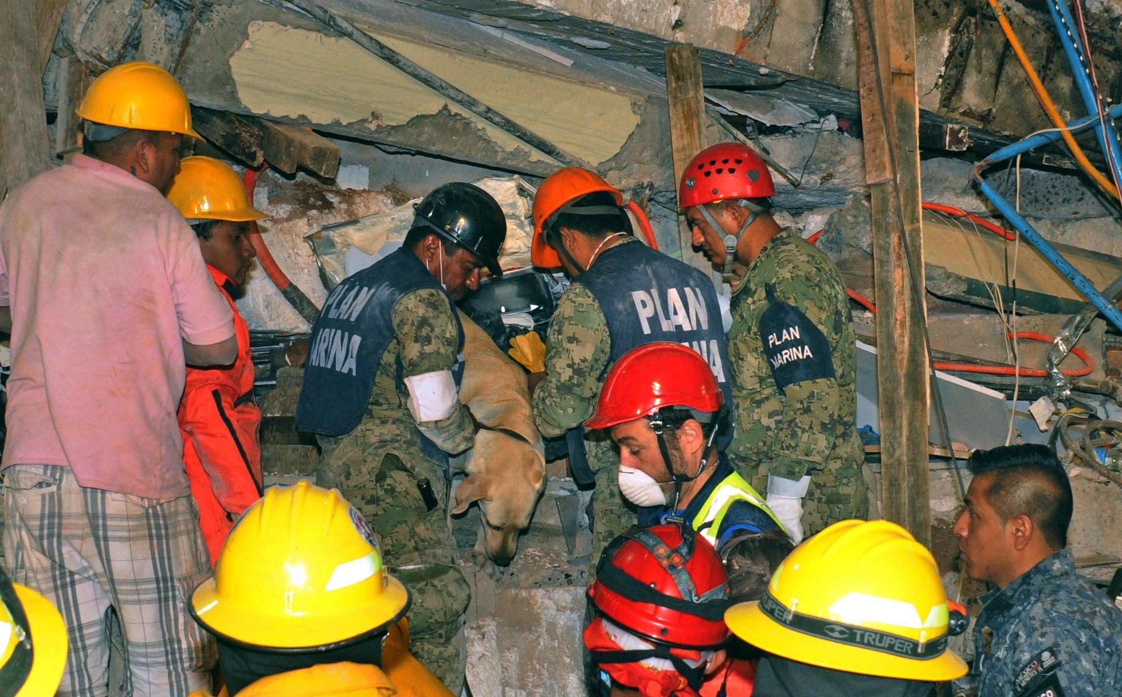 Terremoto in Messico, le vittime, i superstiti e le loro storie
