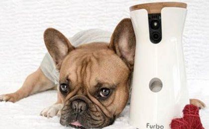 Furbo, la videocamera per controllare il tuo cane