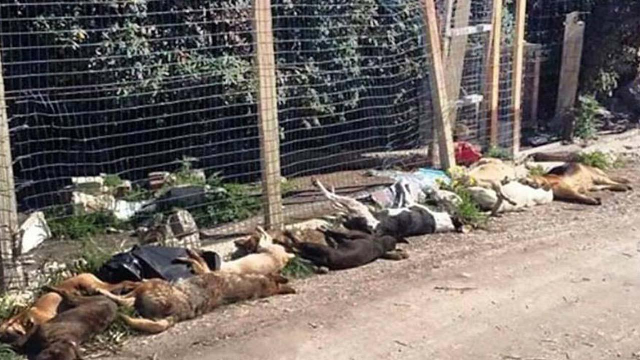 Sicilia, 30 cani uccisi a Sciacca: la strage compiuta col veleno