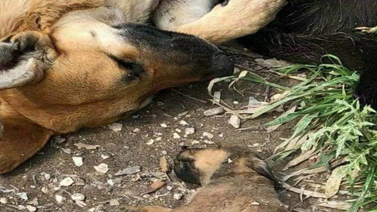 cani uccisi sciacca