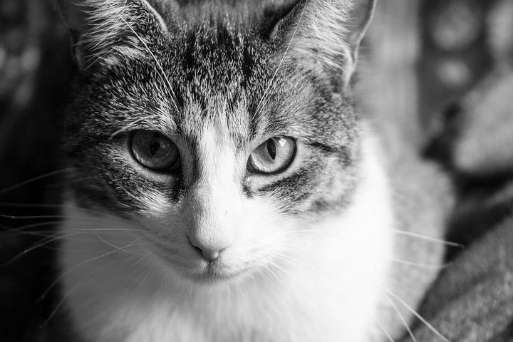 Spazzola il gatto e muore per una crisi respiratoria, vittima una 38enne