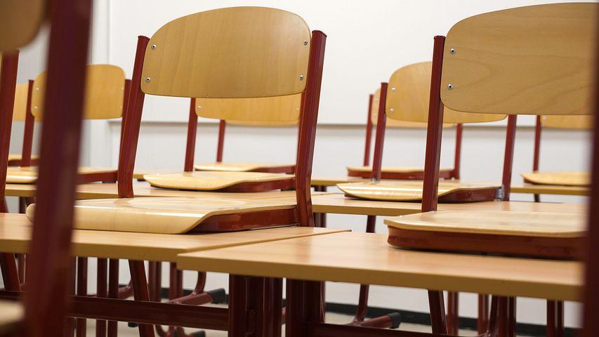 """Bologna, topo cade sulla testa della maestra. La rabbia dei genitori: """"Scuola infestata da anni"""""""