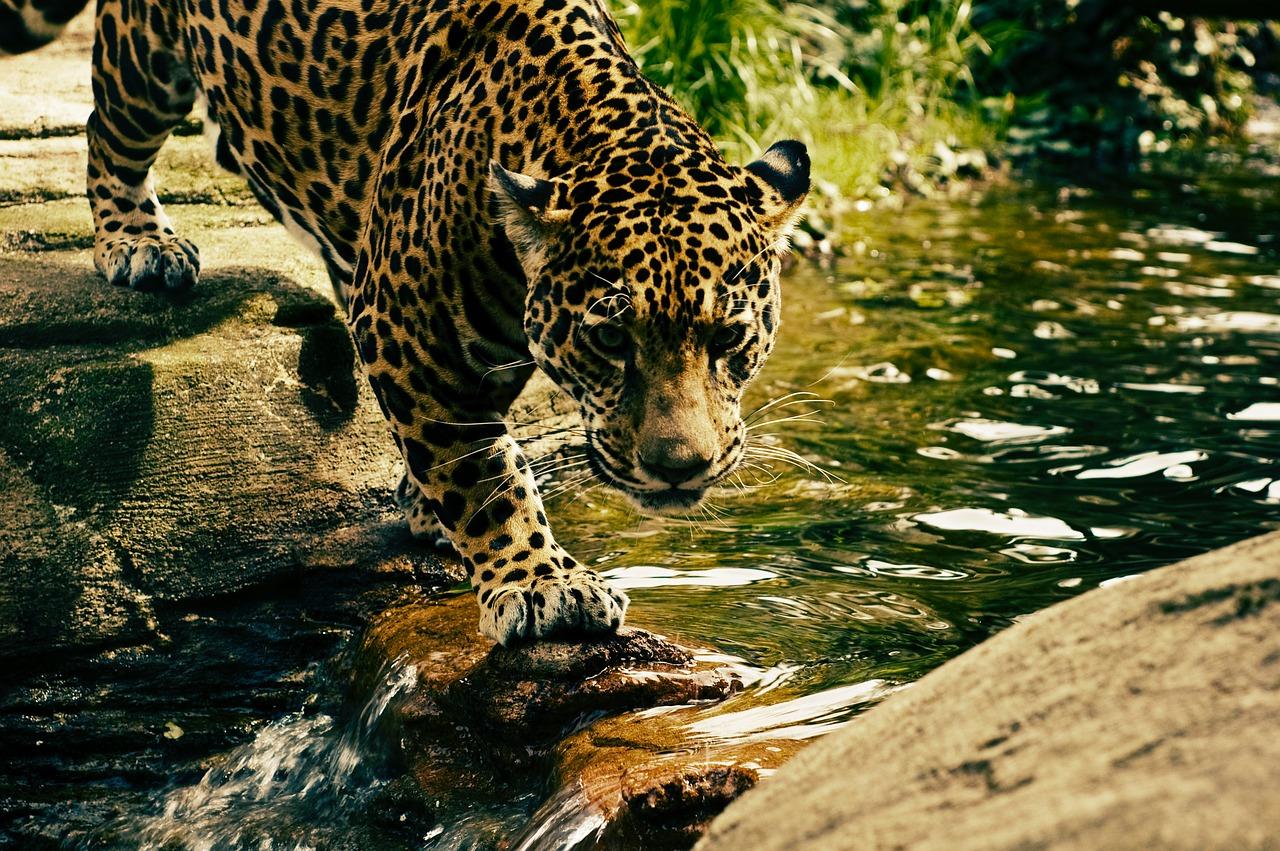 Bambino di 3 anni sbranato da un leopardo in un safari park in Uganda