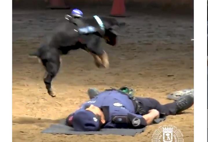cane poliziotto massaggio cardiaco