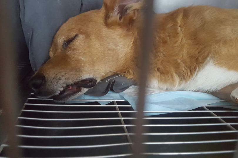 Latina: morto Lucky, il cagnolino preso a bastonate e gettato nei rifiuti