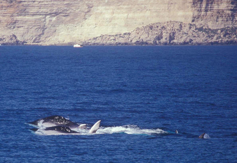 Bordighera: balenottere al largo, scatta la corsa al selfie con i cetacei
