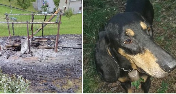 cani bruciati vivi nel recinto