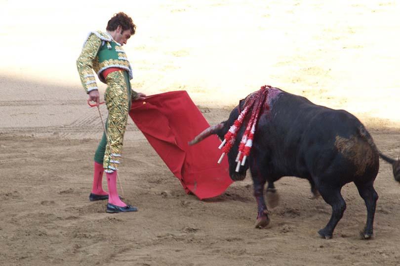 Portogallo, padre torero sfida l'animale con in braccio la figlia: nuova bufera sulle feste taurine