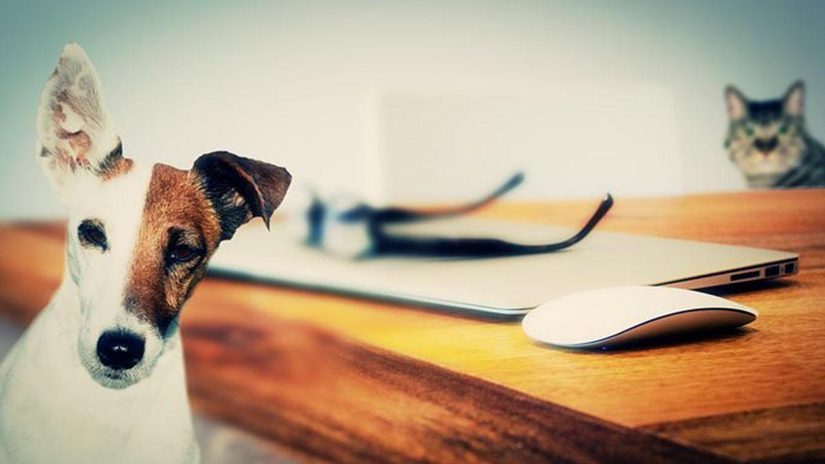 Roma, in ufficio con cani e gatti: proposta di Fratelli d'Italia