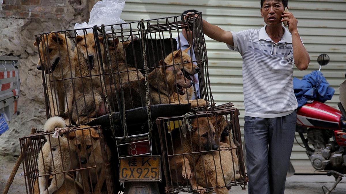 Yulin, il mercato cinese degli orrori: cani macellati senza pietà