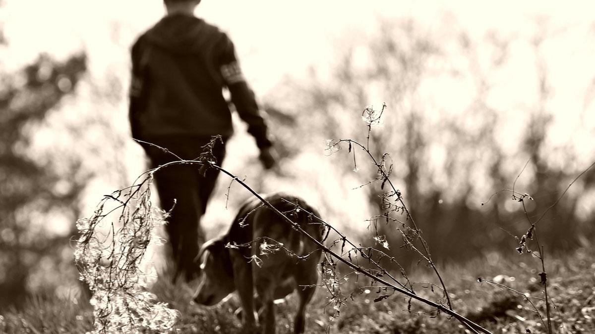 Sondrio, bimbo di 5 anni solo in casa con 10 cani: escrementi ovunque, affidato ai servizi sociali