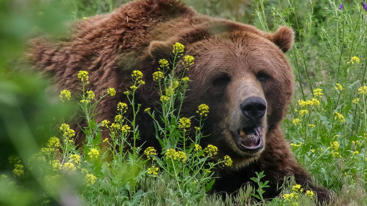 Madre e figlia di 10 mesi uccise da un orso