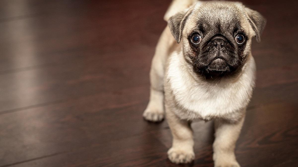 Agrigento: coppia divorzia, il giudice dispone l'affido condiviso del cane