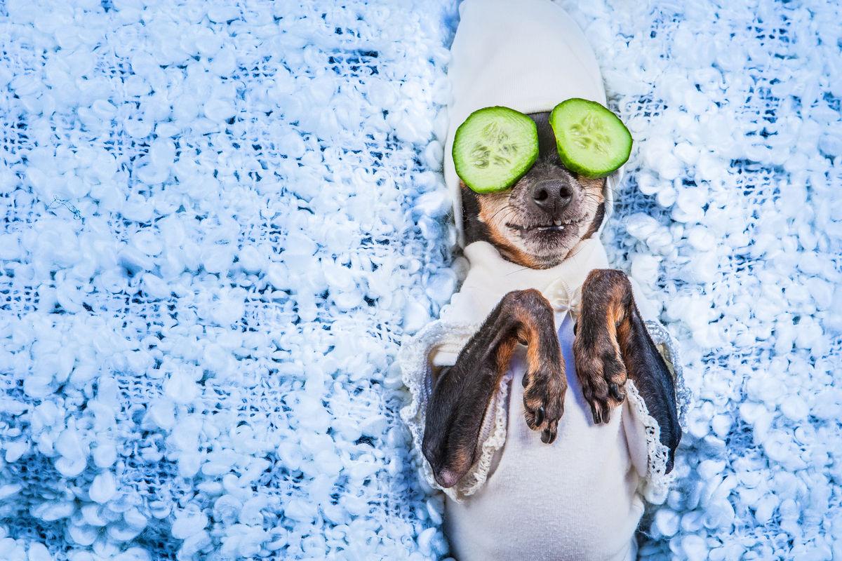 Cagnolino con cetrioli sugli occhi
