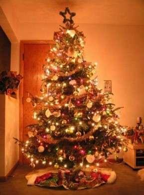 Albero di Natale: storia e leggende