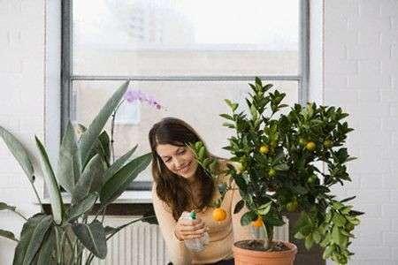 curare piante