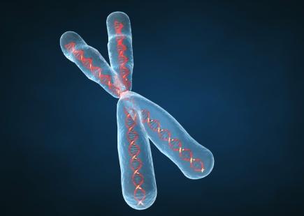 Sindrome di Klinefelter cromosoma X