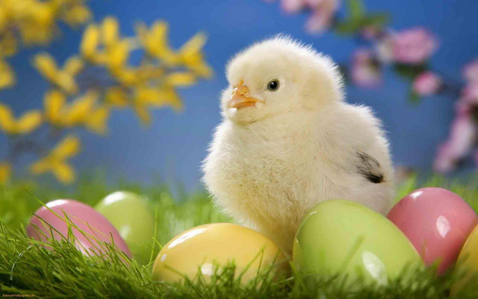 Pasqua primavera