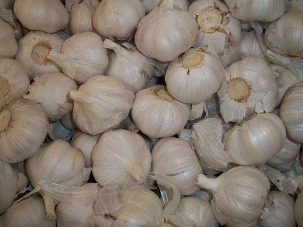 Combattere il sovrappeso con l'aglio