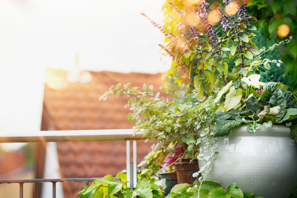 Piante e fiori da balcone perenni o resistenti
