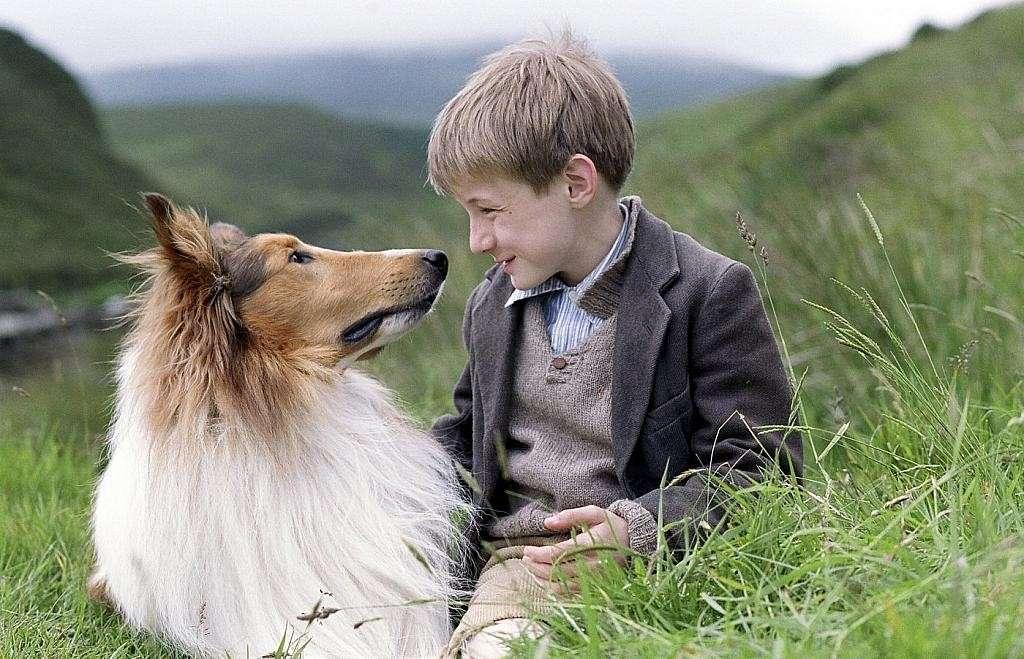 Cani, gatti e non solo: gli animali al cinema e in TV [FOTO]
