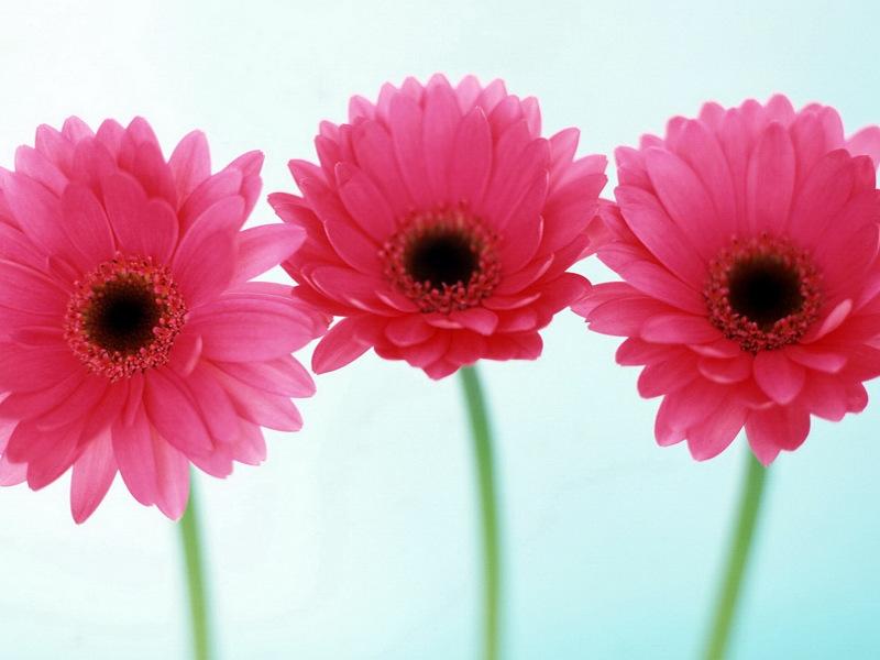 Come mantenere i fiori a lungo: i trucchi utili
